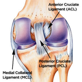 There Are 4 Important Ligaments In The Knee: