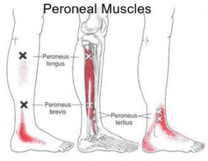 peroneal text